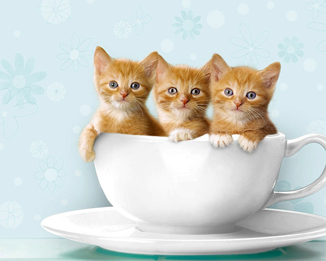 in-a-teacup