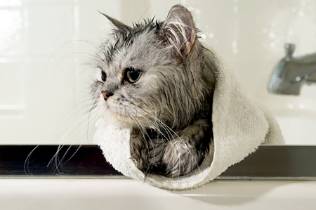 give-cat-bath-450mk060811