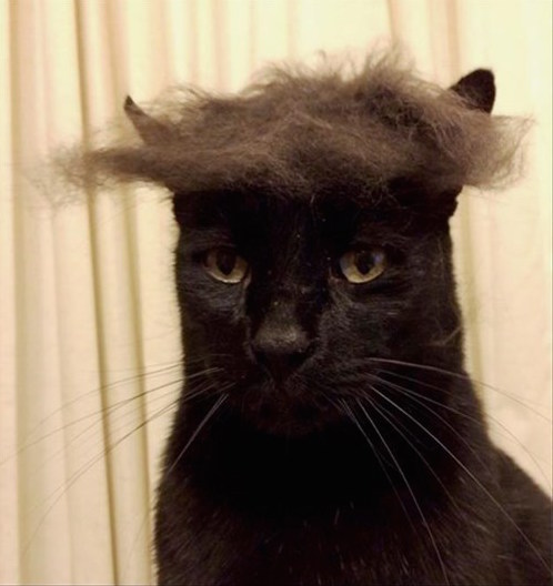 Cat with hair